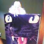 cat-fairy