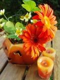 s-hallo-flower