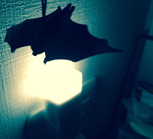 17hallo-bat