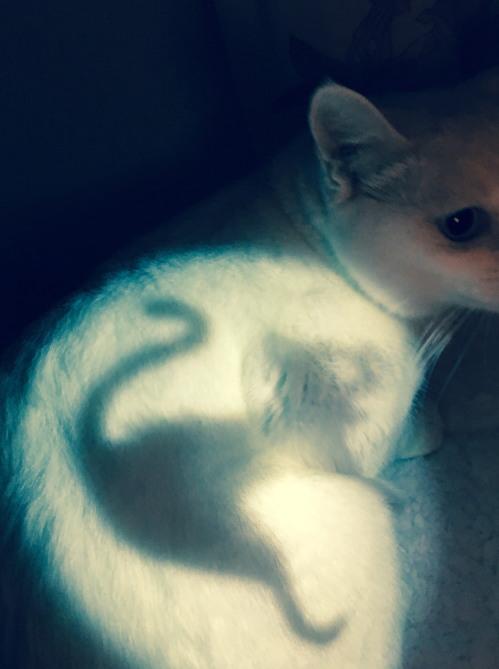 17hallo-whitecat